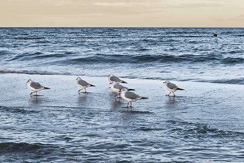 Strandabschnitt, Ostsee